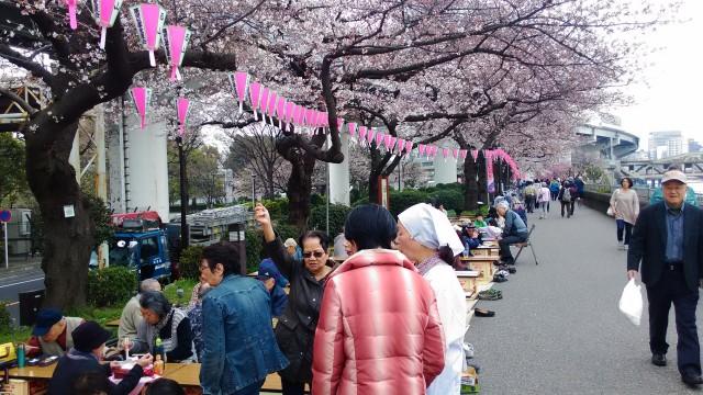 隅田川(東京都)桜まつりでお花見指定席