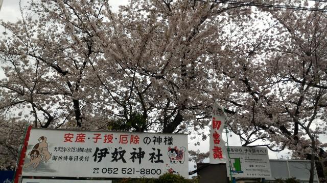 伊奴(いぬ)神社(名古屋市西区)の満開の桜と神社の看板