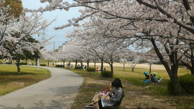 愛知県春日井市落合公園の満開の桜とベンチでくつろぐ人