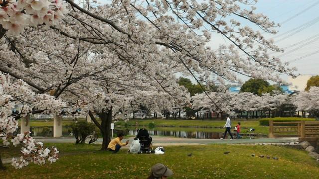 愛知県春日井市落合公園桜を楽しむ人たち