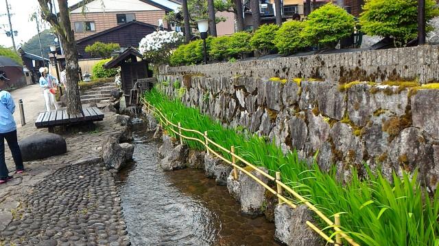 岐阜県郡上市安養寺の西柳町の水路、花菖蒲?