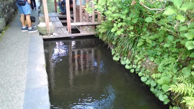 岐阜県郡上市いがわこみちの水
