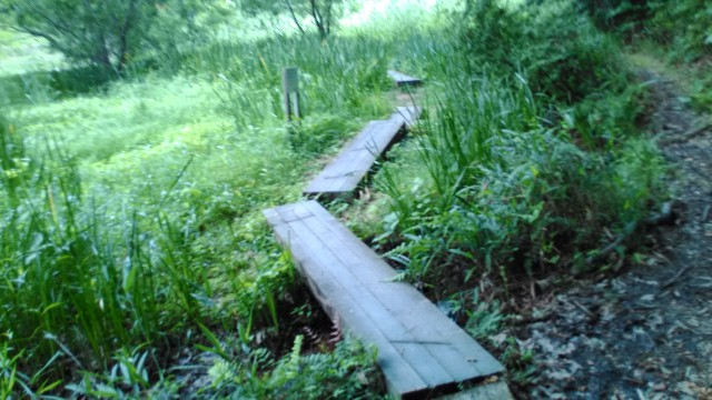 名古屋市千種区平和公園「里山の家」からのくらしの森散策蕗