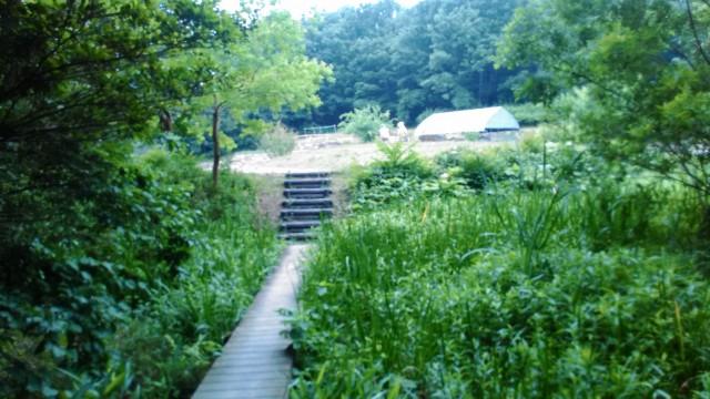 名古屋市千種区平和公園「里山の家」からのくらしの森散策蕗広場