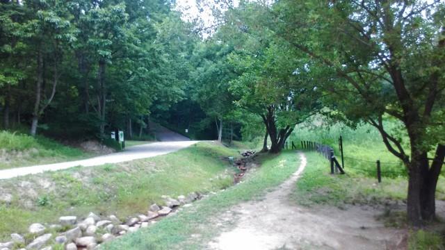 名古屋市千種区平和公園「里山の家」からのくらしの森散策蕗風景