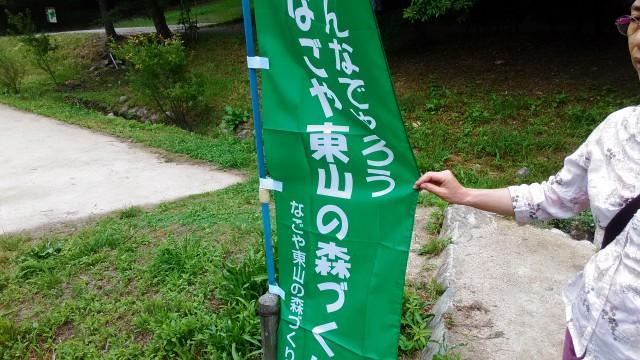 名古屋市千種区平和公園「里山の家」からのくらしの森散策蕗にあるのぼり