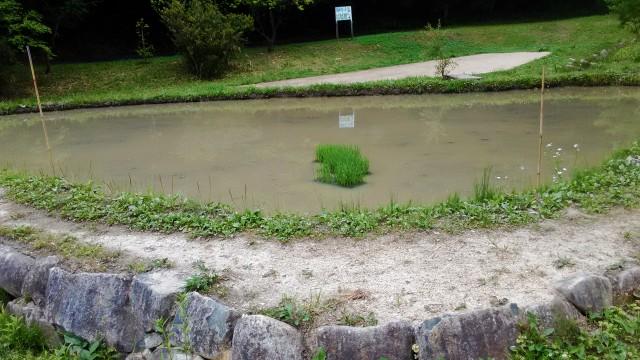 名古屋市千種区平和公園「里山の家」からのくらしの森散策蕗にある水田