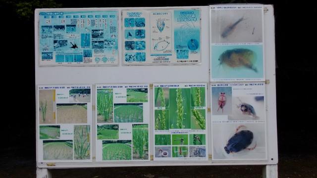 名古屋市千種区平和公園「里山の家」からのくらしの森散策蕗生き物など紹介