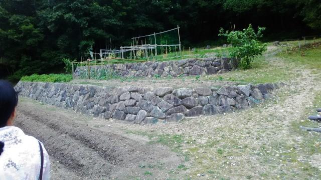 名古屋市千種区平和公園「里山の家」からのくらしの森散策蕗の畑