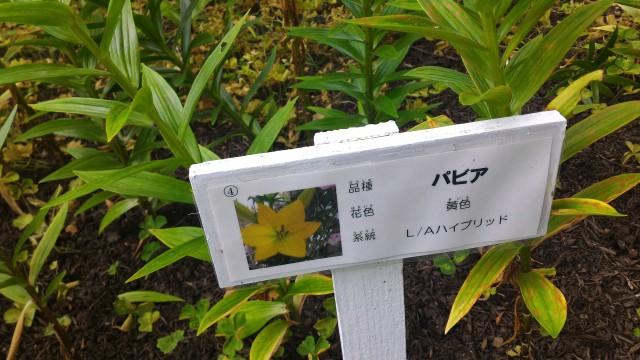 千種公園(名古屋市千種区)ユリの種類の看板