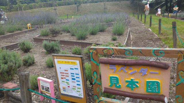 荒子川公園(名古屋市港区)ラベンダー見本園