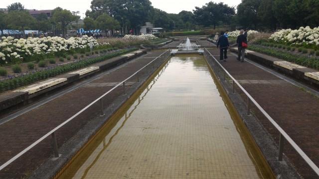 荒子川公園(名古屋市港区)のサンクガーデン洋風庭園と白いあじさい