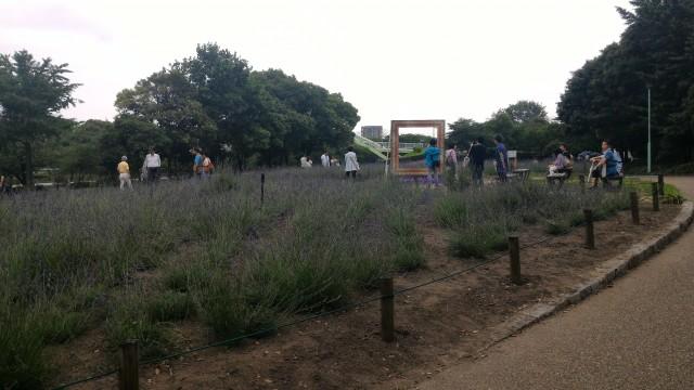 荒子川公園(名古屋市港区)のラベンダー園