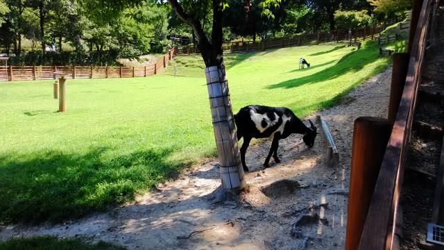 小牧市民四季の森の「ちびっこ動物村」のやぎ