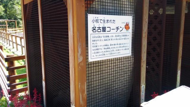 小牧市民四季の森の「ちびっこ動物村」の名古屋コーチン