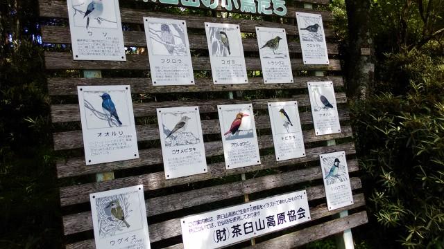 茶臼山高原の矢筈池(やはずいけ)の周囲の野鳥の数々