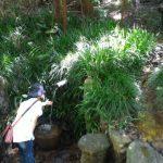 尾張富士(大宮浅間神社奥宮)からの下り銀明水に触れる