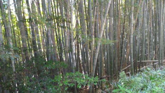 尾張富士(大宮浅間神社奥宮)からの下り脇の竹林