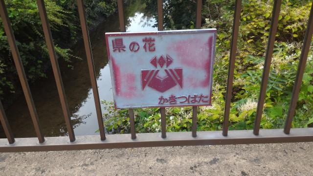 朝宮公園(愛知県春日井市)のふれあい橋県の花
