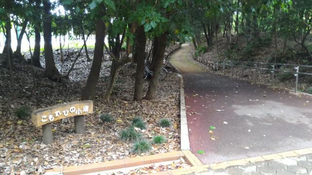 朝宮公園(愛知県春日井市)のこもれびの小道