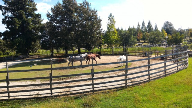 日本昭和村のふれあい牧場・馬