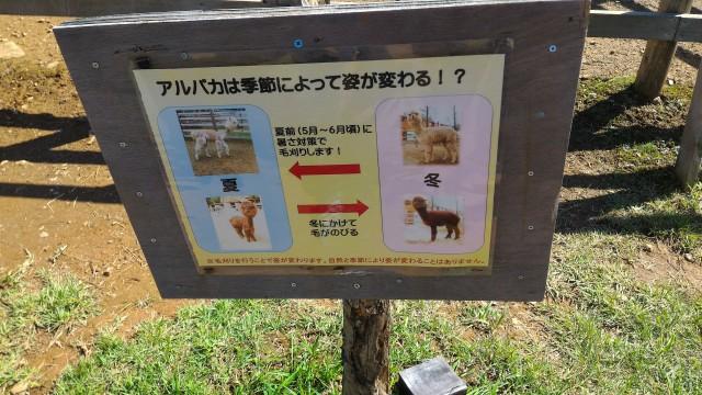 日本昭和村のふれあい牧場のアルパカの姿は変わるという看板
