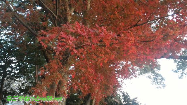 熱海伊豆山神社本殿からの景色と紅葉