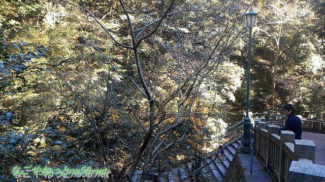 三重県桑名市の多度大社の本殿付近の桜(12月下旬)