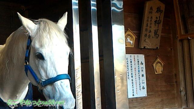 多度大社・神様の使い白馬「錦山」と上げ馬神事の超!急坂(三重県桑名市)