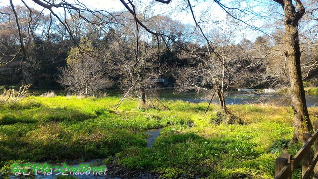天然記念物柿田川湧水の散策路からみた景色