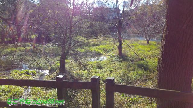 天然記念物柿田川湧水の散策路からみた景色八橋の付近
