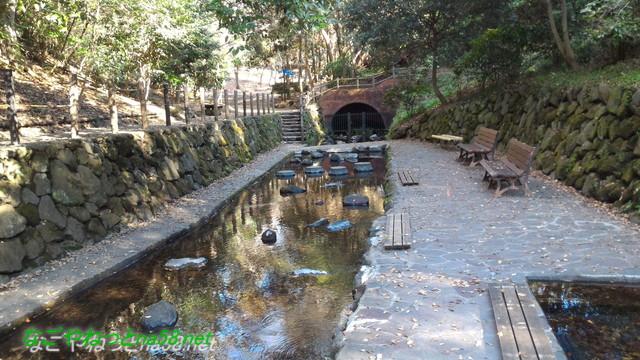天然記念物柿田川湧水の散策路の湧き水が見られるところ