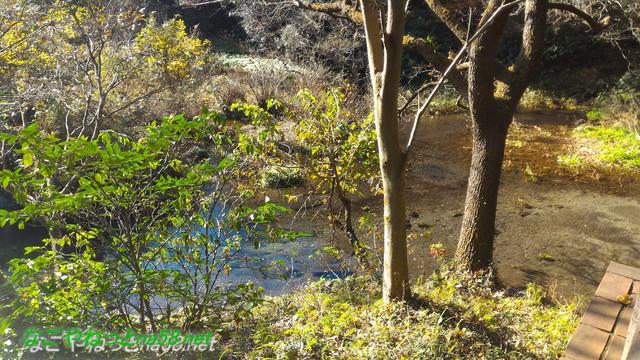 柿田川湧水群第一展望台からの光景(静岡県清水町)
