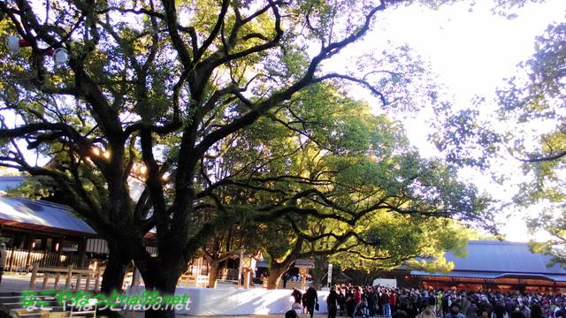 名古屋市熱田区熱田神宮の御本殿前の参拝客を大楠のところから
