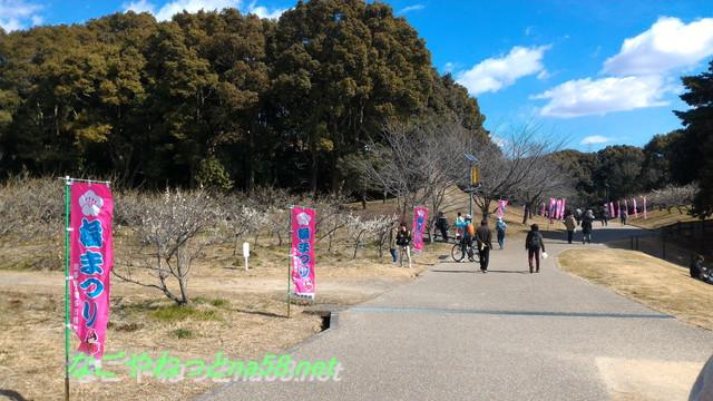 佐布里池の梅林(愛知県知多市)はのぼりがあるので道がわかりやすい