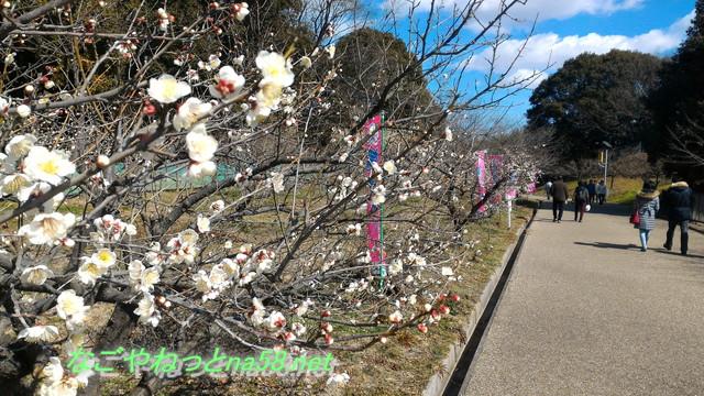 「そうり池梅まつり」知多・駐車場/入園料/珍しい梅が鑑賞できる!(愛知県知多市)