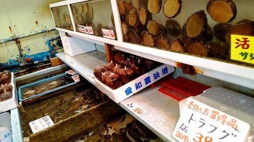 愛知県南知多豊浜「魚ひろば」のいけす