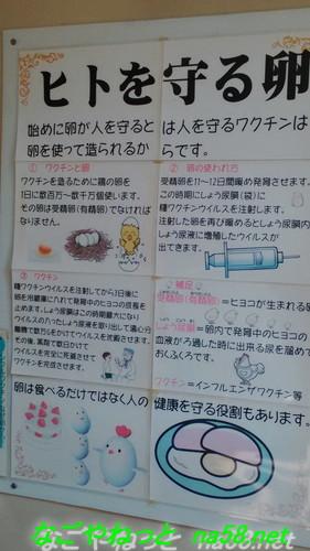 名古屋市農業センター(でらファーム)鶏の卵からワクチンをつくる説明