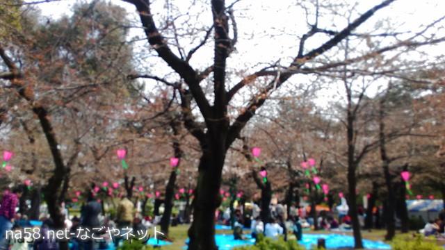 鶴舞公園花見風景