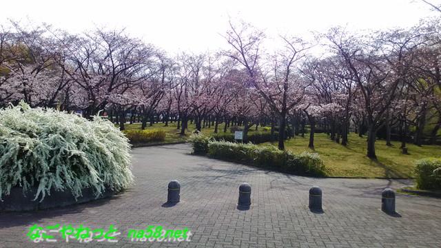 名古屋市平和公園桜の園入内嶋口付近
