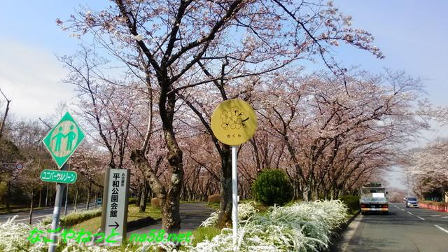 名古屋市平和公園桜の園駐車禁止じゃない