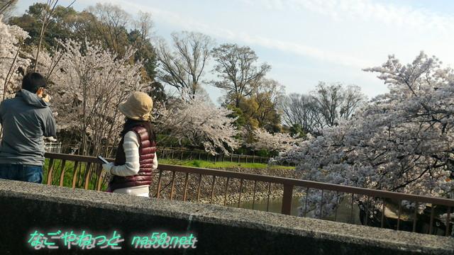 名古屋市中区名城公園の桜