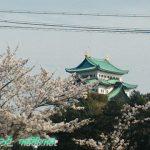 名古屋市中区名城公園の桜車から仰ぎ見る