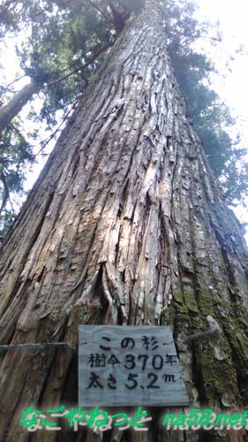 愛知県新城市鳳来山の東照宮の巨大杉の木樹齢370年