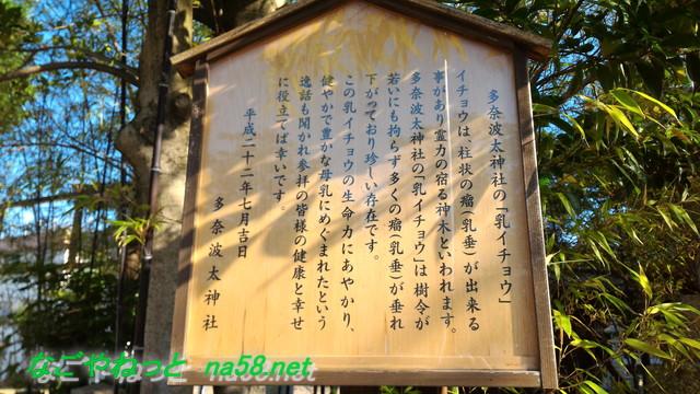 名古屋市北区多奈波太(たなばた)神社の乳イチョウについての説明