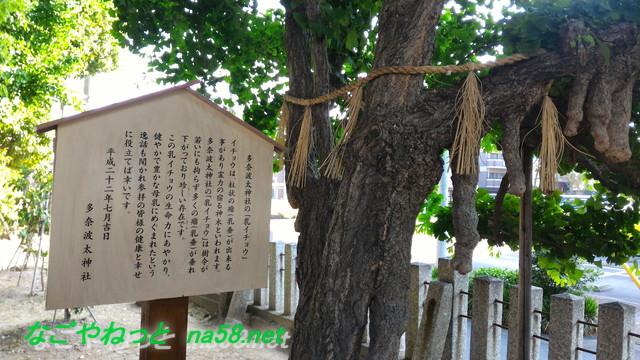 名古屋市北区多奈波太(たなばた)神社の乳イチョウ