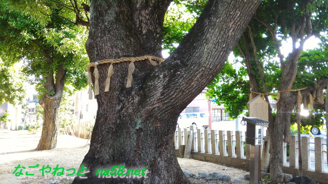 名古屋市北区多奈波太(たなばた)神社の御神木