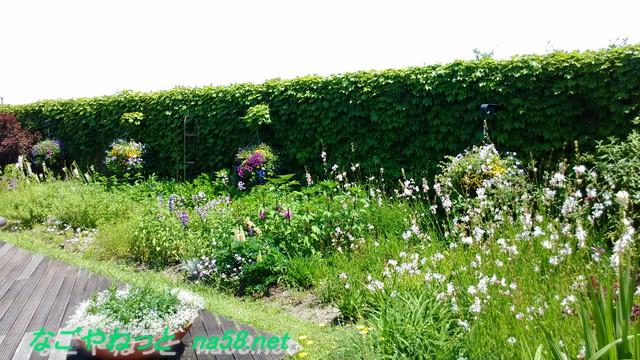 名古屋市港区フラワーガーデン「ブルーボネット」ウォールトガーデンの花