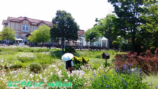 名古屋市港区フラワーガーデン「ブルーボネット」花畑を散策