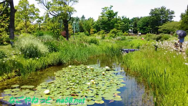 フラワーガーデン「ブルーボネット」の園内風景池とスイレン